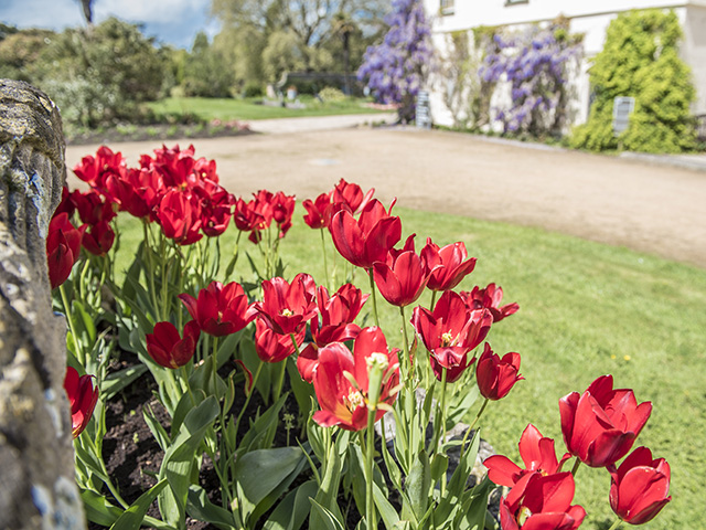 There are beautiful flowers in the Manor gardens throughout the year
